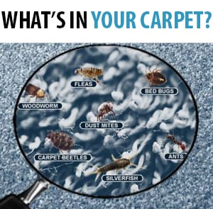 What's In Your Carpet?